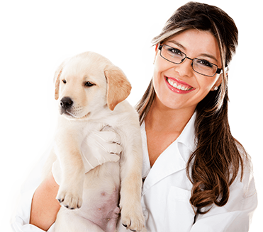 Veterinary | Veterinary Patient Financing | Pet Medical Care | Dogs Care | Denefits